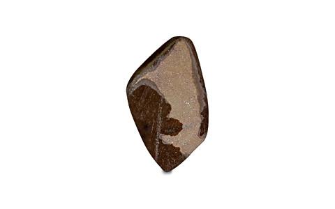 Ammolite - 8.52 carats