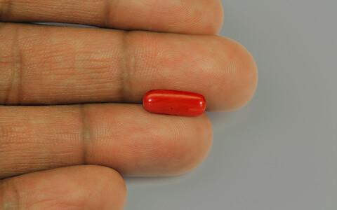 Red Coral - 2.21 carats