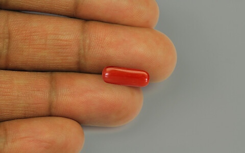 Red Coral - 1.91 carats